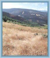 Widok na grzbiet Orlika z wierzchu góry Kopa Biskupia