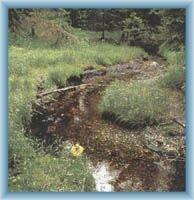 Żółty potok w torfowisku