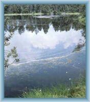 Wielkie mchowe jeziorko