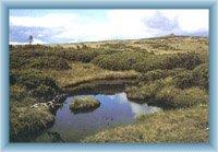 Łabska łąka