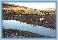 Biała łąka z Luczni budą